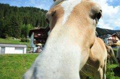 Tiere hautnah - Weidegebiet Ochsengarten