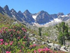 Mittertal mit Alpenrosenblüte