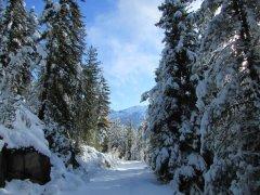 Bienenweg im Winter